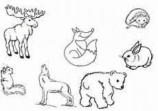 ausmalbilder waldtiere waldtiere ausmalbilder tiere