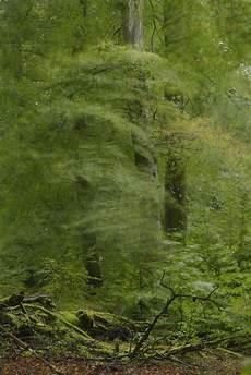 Malvorlagen Urwald Europa Europas Letzte Urw 228 Lder Book Photography Wildlife