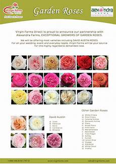 Garden Roses Chart Farms First Class For Flowers