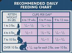 How Much To Feed A Cat Chart How Much Food Do You Feed A Cat Per Day Catwalls