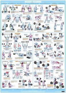 Weight Lifting Exercise Chart Whole Body Workout Weight Training Exercise Chart