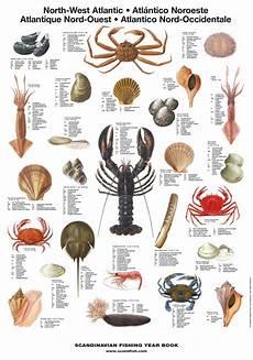 Shellfish Chart North West Atlantic Shellfish Poster Unique Chart Sea