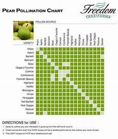 Apple Tree Pollination Chart Pear Pollination Chart Pollination Fruit Trees Apple Tree