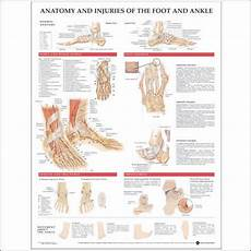 Foot Anatomy Chart Injuries Of Foot Amp Ankle Anatomical Chart Charts Model Ebay