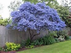 sempreverdi da giardino piante ornamentali da giardino sempreverdi decorazioni