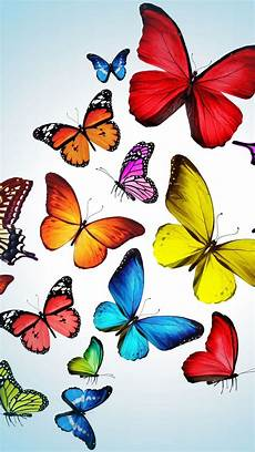 wallpaper iphone free butterfly iphone 5 wallpapers photo butterfly