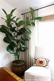 six easy care indoor plant ideas classic casual home