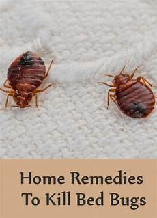 Bed Bug 8 Home Remedies To Kill Bed Bugs Search Home Remedy