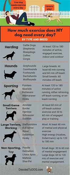 Puppy Exercise Chart How Much Exercise Does A Dog Need Every Day