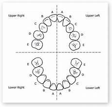 Deciduous Teeth Chart Dental Tooth Numbering Child Tooth Chart Dental Teeth