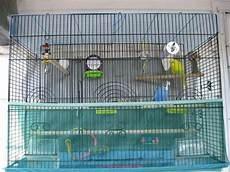 gabbie voliere gabbie per cocorite uccelli esotici voliere per le