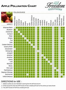 Apple Tree Pollination Chart Questions About Apple Trees Gardening