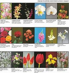 Flower Chart With Names And Pictures Fresh Flower Identification Chart Be Great Printout With