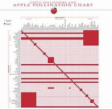 Apple Tree Pollination Chart Apple Pollinizer Chart Http Www Acnursery Com Apple
