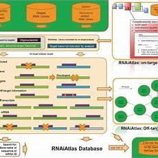 Dharmacon Sirna Design Tool Pdf Rnaiatlas A Database For Rnai Sirna Libraries And