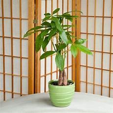 Low Light Pet Safe Indoor Plants 26 Best Non Toxic House Plants Children Dogs Cats Images
