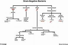 Gram Positive And Gram Negative Bacteria Chart Gram Negative Bacteria Microbiology Medbullets Step 1