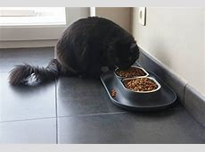 HEPPER NOMNOM PET BOWL Your cat can enjoy stress free meals with our whisker friendly design