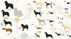 Dog Name Chart 181 Breeds Of Dog On One Awesome Poster
