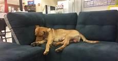 negozio di divani il dorme sui divani negozio un dipendente dell