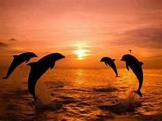 bakgrunnsbilder bonitos μαγικές φωτογραφίες δελφίνια στο ηλιοβασίλεμα patras