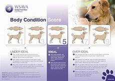 Ideal Weight For Dogs Weight Chart Healthy Dog Weight And Dog Obesity Karingal Vet Hospital