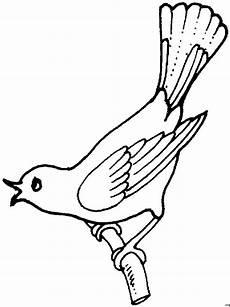Malvorlage Vogel Fliegend Singender Vogel Auf Ast Ausmalbild Malvorlage Tiere