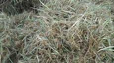 Fescue Hay Jaylor A 100 300lbs Corn Silage With 300 Lbs Of Fescue