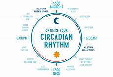 Circadian Rhythm Chart Everything You Need To Know About Your Circadian Rhythm