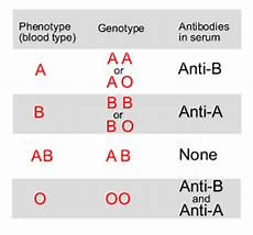 Genotype Chart For Blood Types Blood