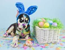 happy easter dogs animals background wallpapers on
