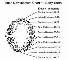 Baby Teeth Chart Letters The Tooth About Dental Trauma Pemblog