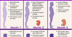 Pregnancy Timeline Chart Telugu Web World Pregnancy Stages Tips For Women