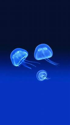 jellyfish blue iphone wallpaper 73 best images about iphone 6 wallpapers on