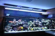 Best Aquarium Lights Beautiful Brazilian Tank With Atlantik V4 Reef Aquarium