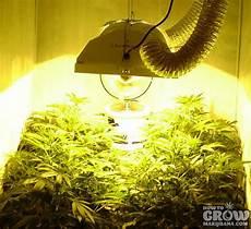 Led Lights Or Hps For Growing Marijuana Grow Lights Led Hps Cfl