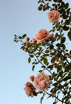 aesthetic flower desktop wallpaper ohne titel