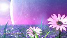 flower wallpapers for hd view all wallpapers flowers wallpapers