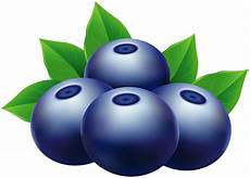 clipart pictures blueberries png clip image gallery yopriceville