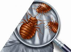 bed bugs charleston sc detection extermination