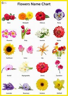 Flower Chart With Names And Pictures Flowers Name In English Pictures Videos Charts Ira