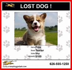 Lost Dog Poster Maker Professional Lost Dog Poster Free Create Lost Dog Poster