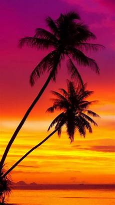 Iphone Wallpaper Cool Tree by Palm Trees At A Beautiful Sunset Ios8 Hd Wallpaper For