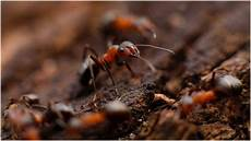 Common Household Pests Get Rid Of Common Household Pests Now Redfin