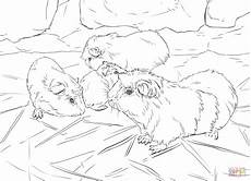 guinea pigs coloring page free printable coloring pages