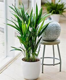 Low Light Pet Safe Indoor Plants 15 Air Purifying Plants You Need In Your Home Home