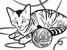 Malvorlage Katze Getigert Tabby Cat Drawing At Getdrawings Free