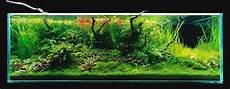 amano aquascape takashi amano s 180x60x60cm triangular driftwood aquascape