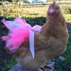 chicken clothes chicken tutu dress princess dress for your hen etsy