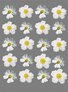 flower wallpaper we it flower wallpaper we it wallpaper flowers and